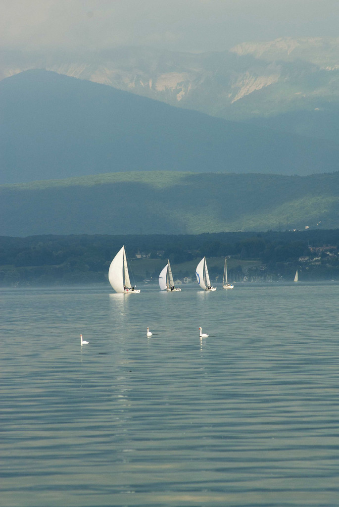 Three Swans in the Bol D'or Mirabaud