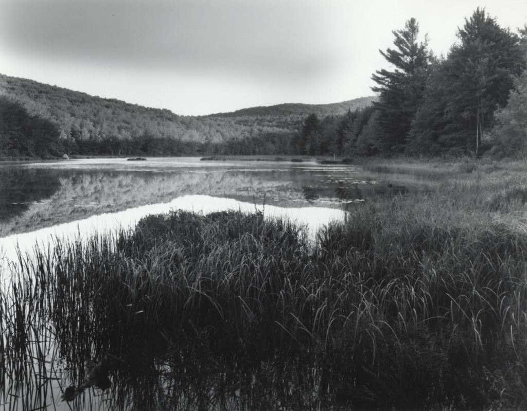 Deer Pond at Dawn