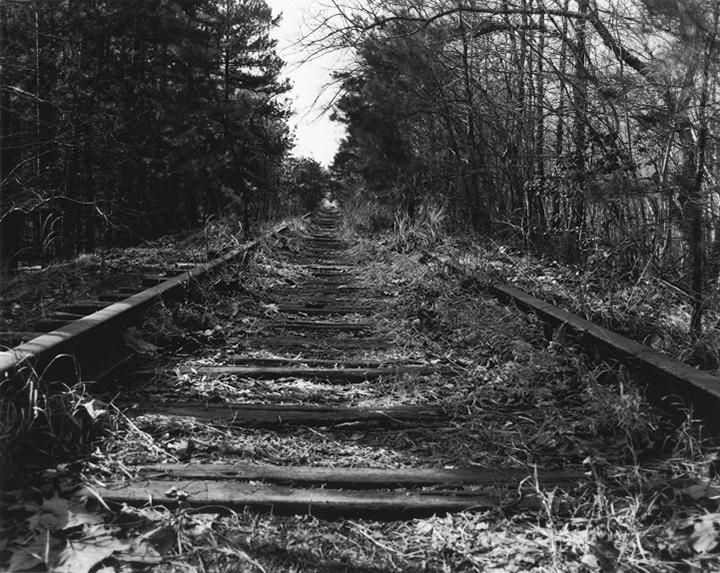 Grassy Tracks