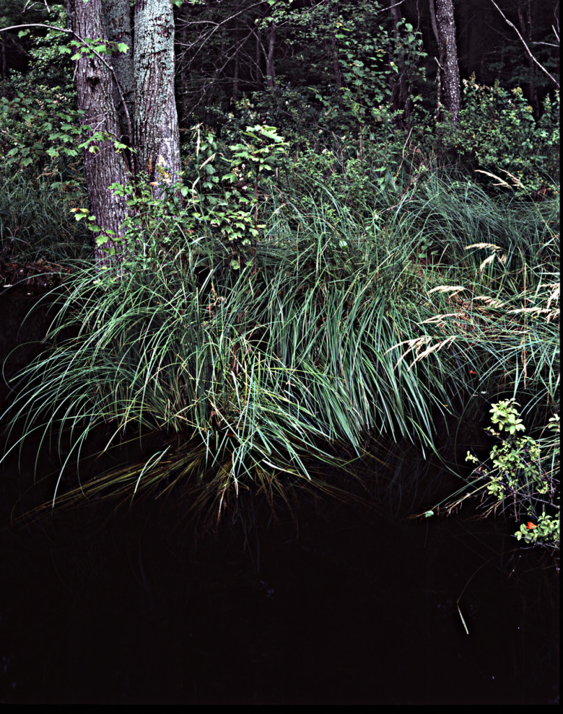 Jefts Road Beaver Pond