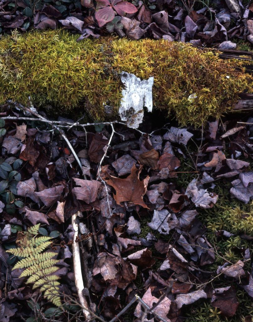 Moss and Bark