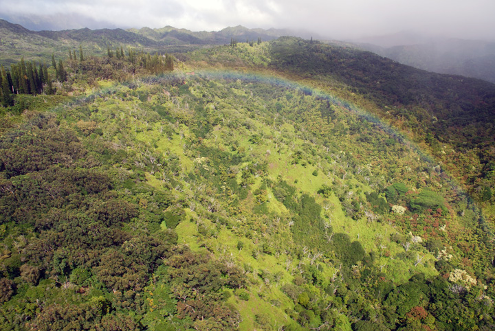 Rainbow below Helicopter, Kaua'i