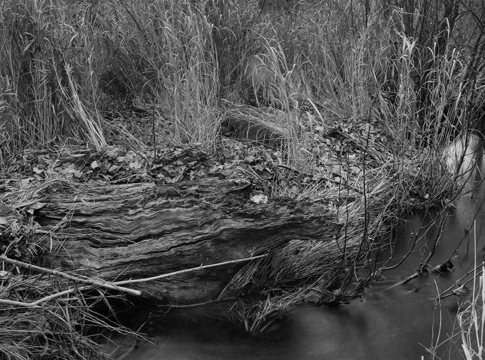 Robinson Brook Wavy Log